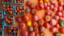 Tomatoes from the farmers market in Naragansett, Rhode Island